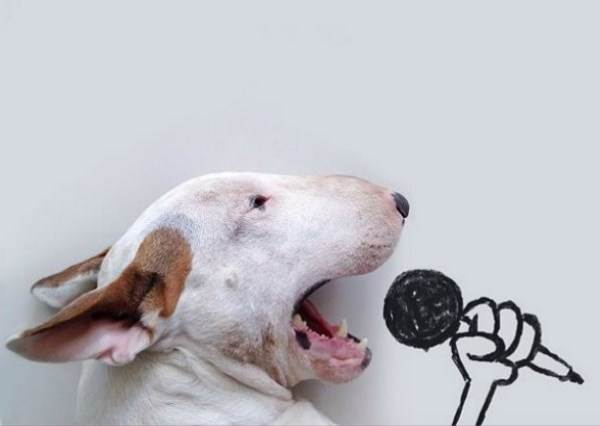 這隻鬥牛犬用最溫柔的方式和主人合唱情歌,被大讚比原唱蕾哈娜更好聽!
