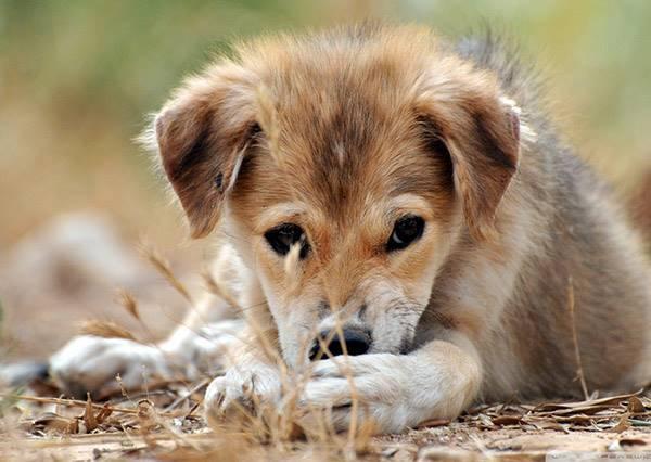 如果是你會怎麼做?救狗一命勝天下事啊!