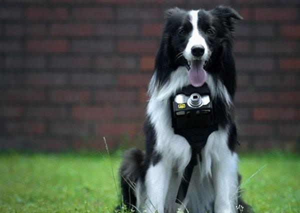 狗狗每天到處跑,你知道牠去哪裡探險了嗎?戴上這個裝置,你就是牠的眼!