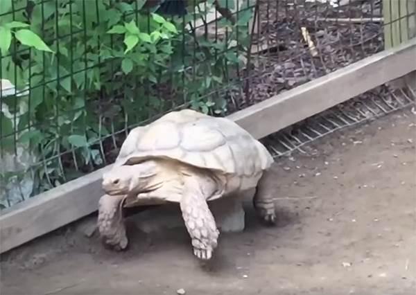 這隻卡在石頭上苦苦掙扎的烏龜會讓你很難過,但繼續看下去的話,就會覺得人生充滿希望!
