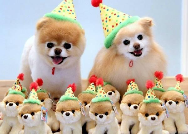 汪星人最愛的生日禮物?不是罐頭大餐、也不是頂級SPA,而是…
