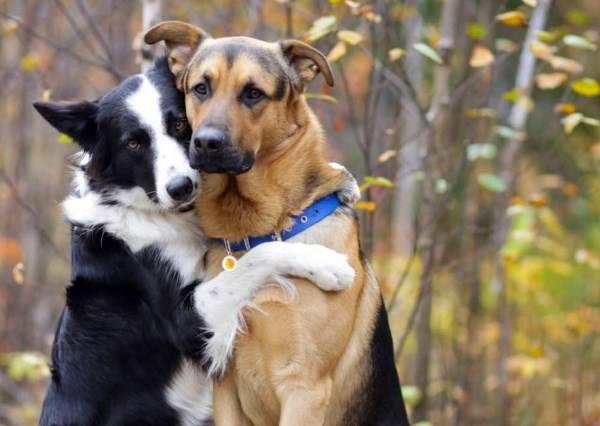 當主人問:誰是你最好的朋友時?這隻邊境牧羊犬用超暖心的動作給答案!