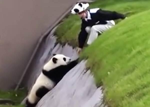 不要阻止我!《熊貓逃脫記》萌出你一臉愛心~