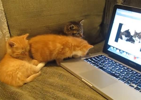 到底在激動什麼啦!3隻貓咪看到寵物聊天影片後竟開口說話...?