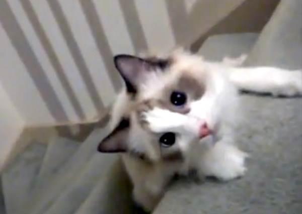 這隻廢柴貓星人要來教大家有史以來最懶惰的爆笑下樓梯法!