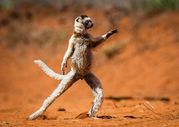 媲美星爺等級的野生動物搞笑照,光看第2張我已經笑到不支倒地了!