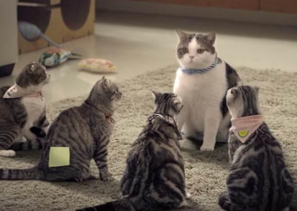 貓咪軍團誓死抵抗「浴室天敵」...《貓版泰國浴》能抓住牠們的心嗎?