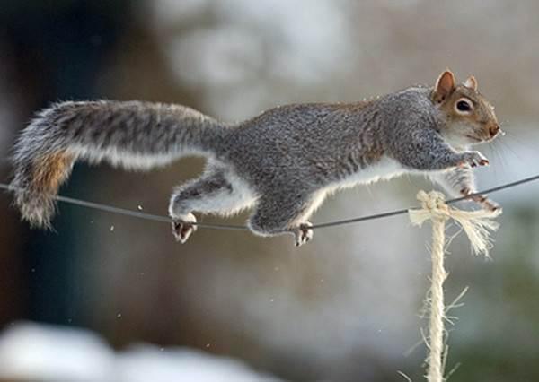 屋主設下重重機關想阻止小松鼠偷吃鳥飼料…但沒想到牠湯姆克魯斯上身輕鬆完成不可能的任務!