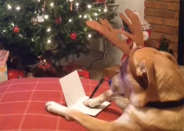 請問有代寫服務嗎?狗狗不是蓋腳印了事,親自手寫聖誕賀卡跟Santa說...