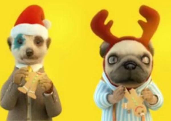 狐獴大叔率領小伙伴猛嗑聖誕大餐,這會是你今天心靈最peace的15秒!