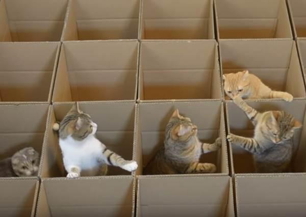 主人把家裡不要的紙箱都擺出來,立刻變成9隻小貓的遊戲天堂!?