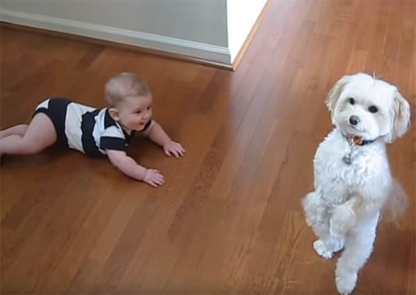 還只是爬行動物的小寶寶看到狗狗不但會站而且會跳舞時,竟然有這種爆炸反應!?