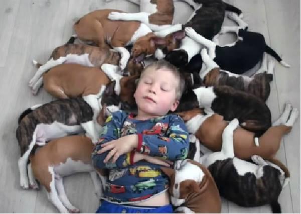 101忠狗真實版!被這16隻狗狗包圍的生活,根本是人間天堂阿!
