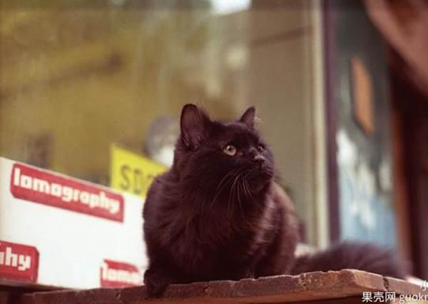 結局超展開!有個男生每天被鄰居養的貓吵到快瘋了,所以他決定‧‧‧