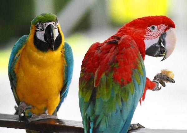 超厲害!食物掉地上撿不到鸚鵡直接放大絕 網友激推:「跟我一樣」