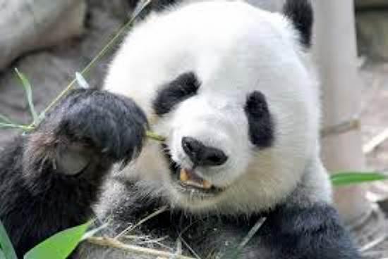 翻個身竟變成一顆球? 功夫熊貓原來這樣練成的!