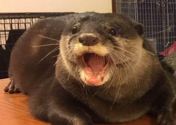 有個網友在網路上爆紅,因為他養的寵物不但超罕見,黏著他做的事更讓所有寵物主人羨慕到爆!