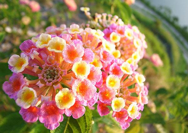 驚!!!家中千萬不要種的六種植物,不然會......