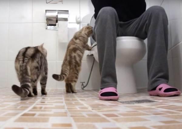 隱私是什麼?可以吃嗎?當主人上廁所時,愛塞乃的毛小孩會…
