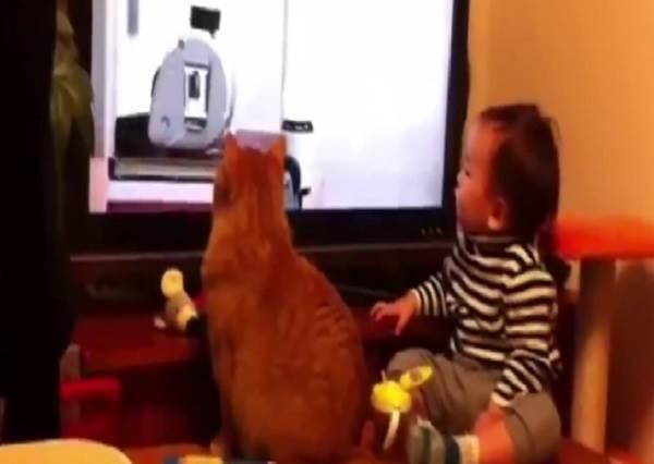 喵電感應真的來了!貓星人和小主人一起看電視,最後三秒更是同步到不科學阿....