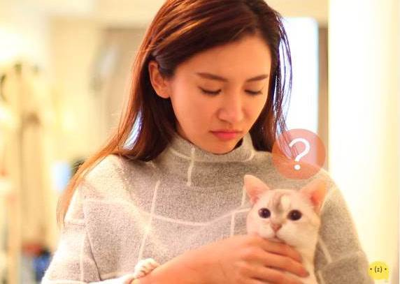 期望與現實 - 貓奴秒懂的5個狀況