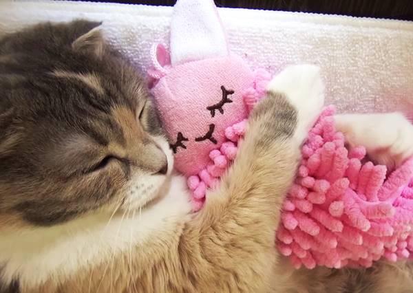【超療癒睡美喵】任何人都願意當王子,讓我來把喵公主吻醒吧!