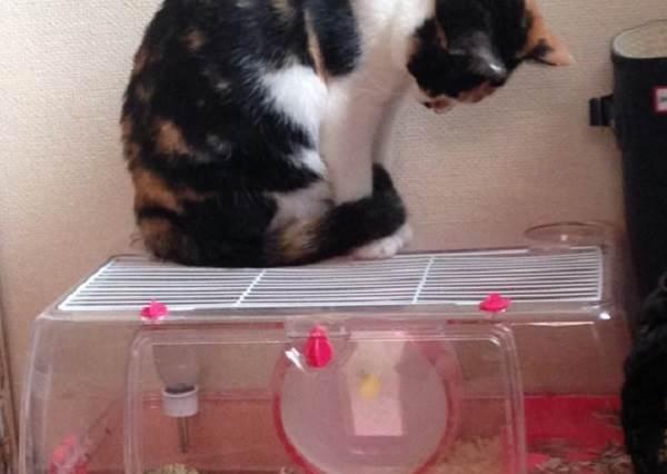 主人搞不懂為什麼喵星人每天都盯著小倉鼠玩滾輪...直到有一天才發現家中洗衣機早就變成「貓用滾輪」了?!
