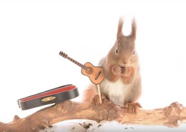 松鼠彈吉他又彈鋼琴?攝影師到底怎麼幫這支樹上樂團拍宣傳照,答案揭曉影片中!