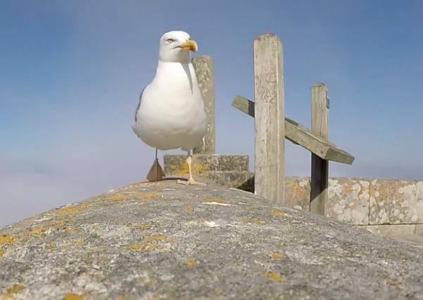 什麼!海邊看似可愛的海鷗居然是...