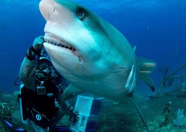 鯊魚竟然是最後一名? 地表上奪走最多人命的9大危險生物,排行第一的「殺人魔」一定會嚇到你!