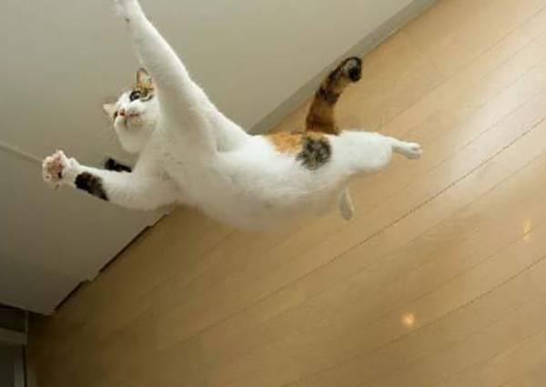 世上也有懼高症的喵星人?人性化下樓方式真的笑慘貓奴們!