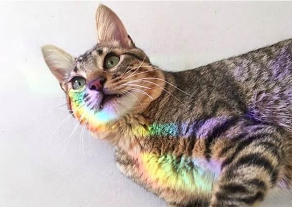 天生就有超逼人的仙氣!身上總有一道「彩虹光環」的貓咪,就算表情再醜都能當仙女