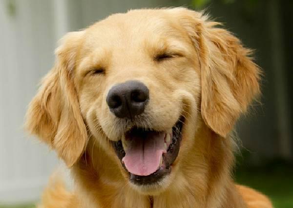 原本以為忠厚老實的黃金獵犬會害怕㊙,結果發現我們都太低估他們了!