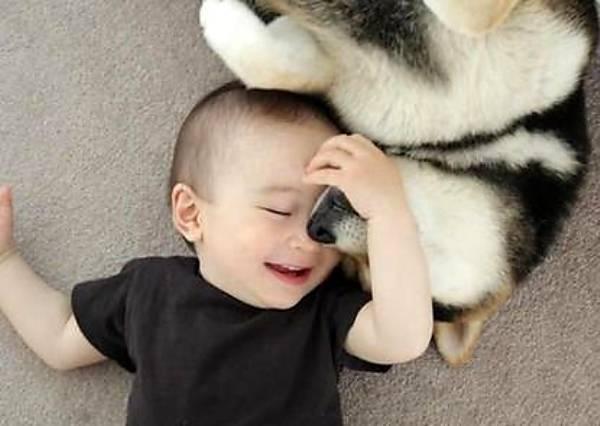 看毛小孩只用了1秒就瞬間瓦解主人「鬱卒一整天」的臭臉,療癒魅力會讓你更愛死牠!