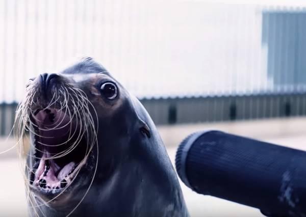 原來海洋生物居然會合奏?看完後你也會想立刻飛奔海生館一探究竟
