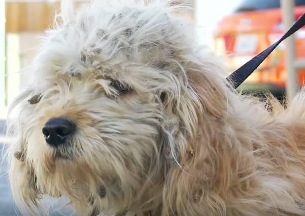 差幾天就要被安樂死的流浪狗,因為一張照片讓牠生命境遇居然就這樣改變了?!