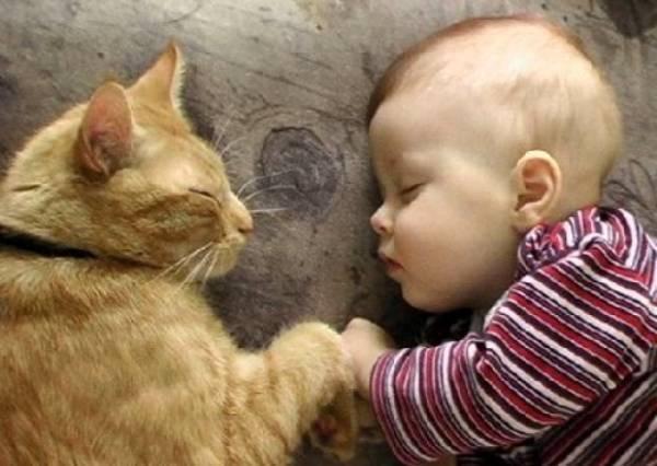 看完小baby對貓咪的激烈反應,你會相信貓奴基因真的會遺傳!