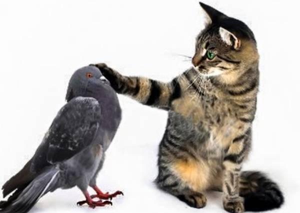 鴿子一個神走位,想贏得這場追逐戰的喵星人會放哪種大絕?