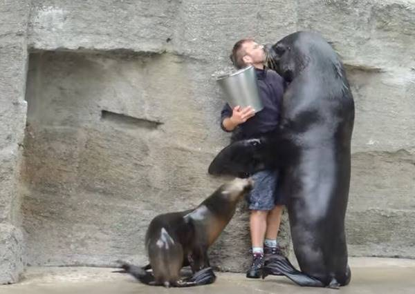 什麼是壁咚的極致?就是海獅瘋狂示愛玩親親