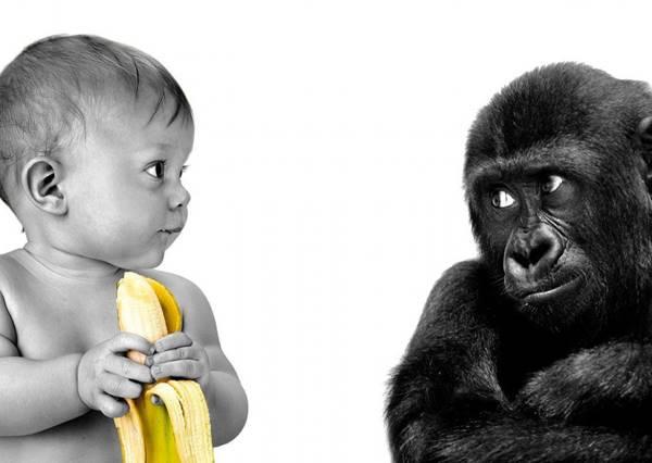 當小男孩靠近玻璃後,猩猩的反應會讓你露出今天最深的笑容!