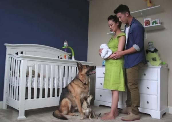 影音/神奇90秒記錄9個月懷孕歷程,夫妻和狗狗迎接寶寶的幸福時刻