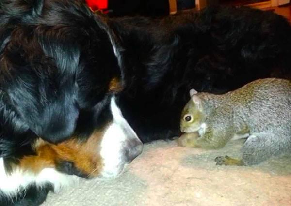 小松鼠到處藏堅果,最後牠發現的好地方讓狗夥伴超無言.....