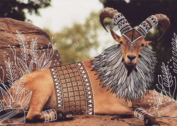 誰說野生動物不能穿衣服?他用線條幫牠們穿「圖騰上衣」,尤其白鷺鷥那套會想下訂單欸