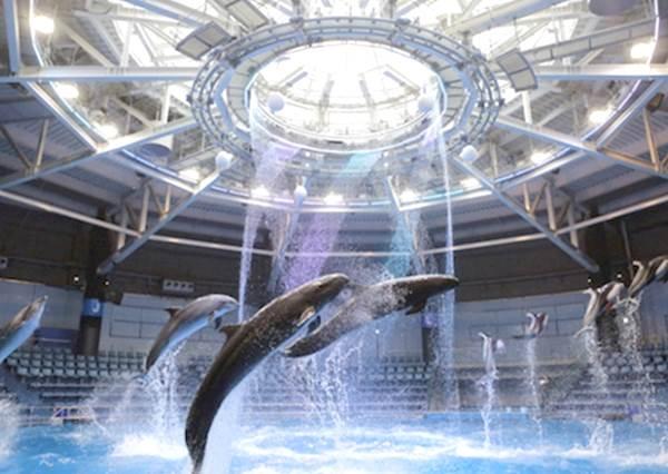 水族館竟然下雪了?還可以跟海豚一起看的日本水族館「銀與藍色海洋的水晶世界」