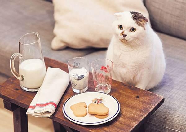圓滾滾的「肉球麵包」也太療癒!日本9款貓咪甜點,貓奴肯定會想收藏這款明信片餅乾組