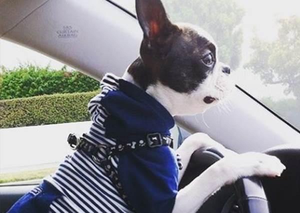 帶狗狗出遠門!避免牠暈車的對策