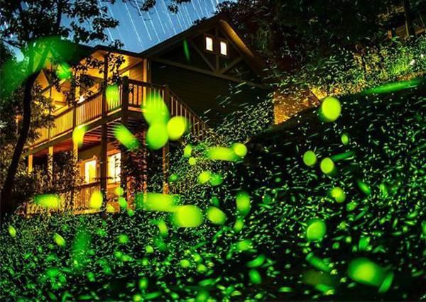 地上的星星眨呀眨!全台追星族必去的「6個螢火蟲夢幻秘境」,怎麼拍都美的嫑嫑!