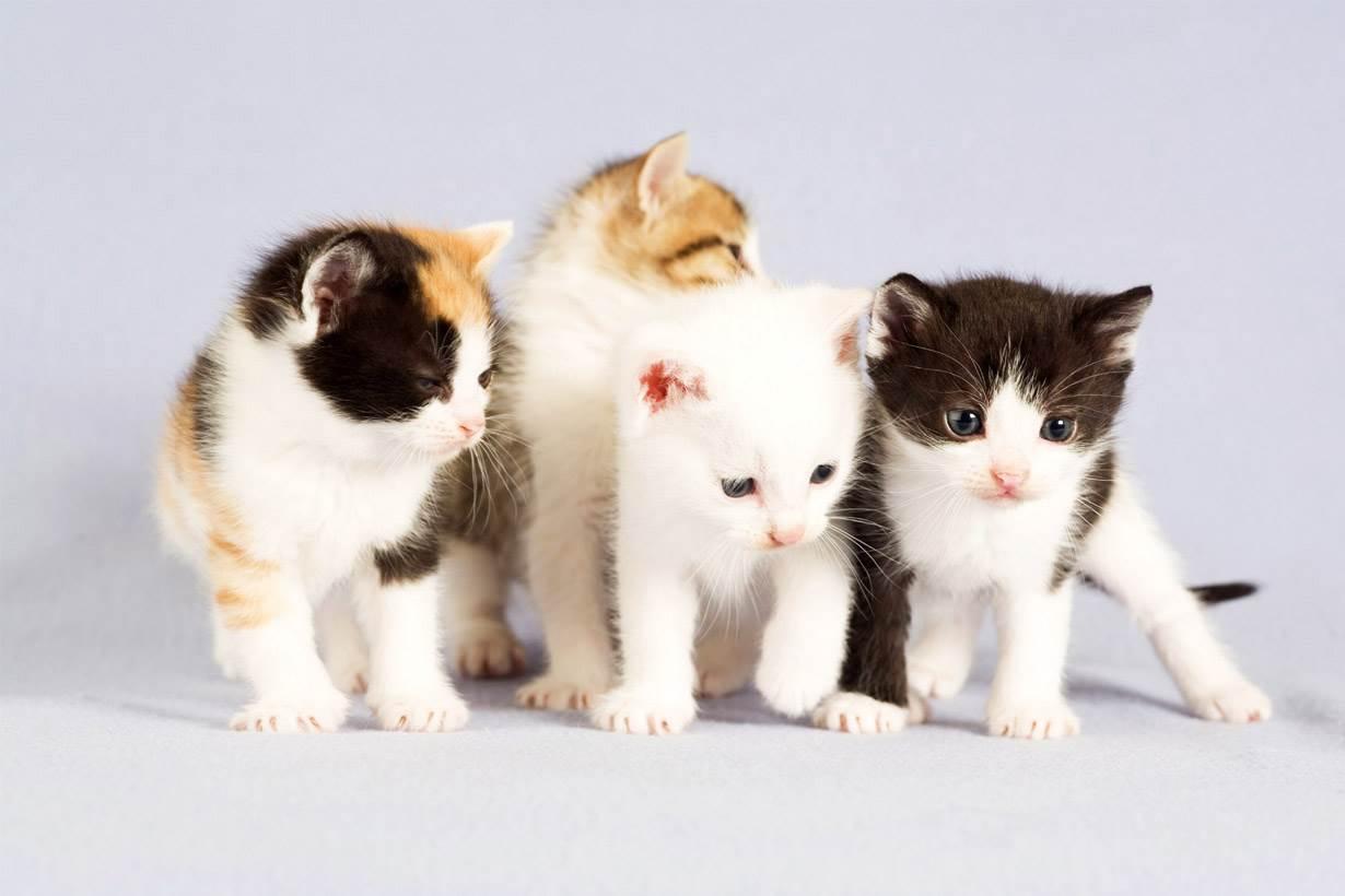 不能跟愛貓雙擁一整天,那這支「貓毛味」香水能一解你的相思之苦!但這是什麼味道啊?