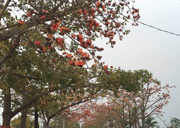 《全球15大最美花海漫步道》絕美的台南「林初埤木棉花道」也入選,連日本人都超驚艷!