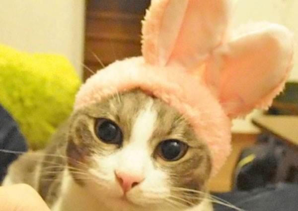 奴才真的不是要整你,是要讓你更萌啊!超可愛寵物兔耳頭套扭蛋,姐願意為了你扭到半夜啊!